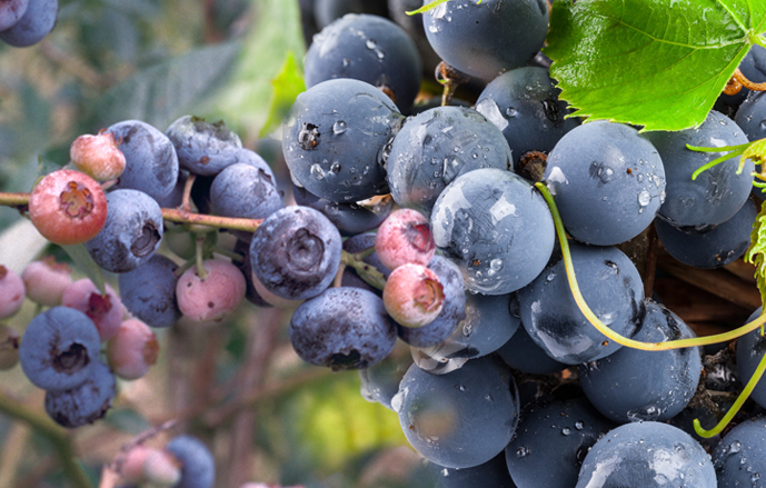 The beneficial effects of polyphenols on our body